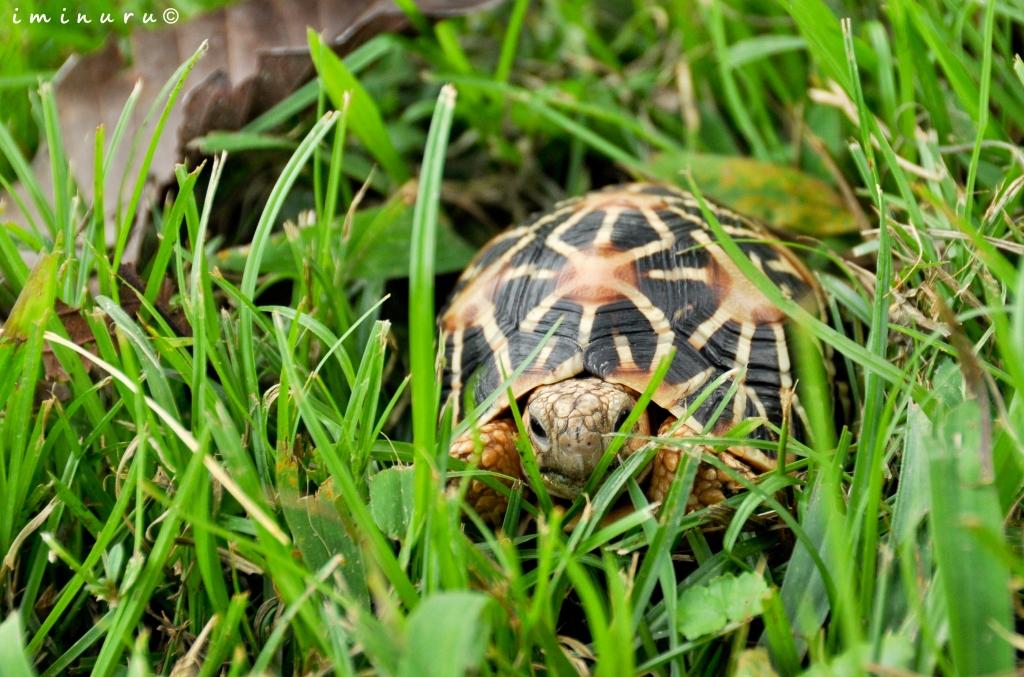 Indian Tortoise Food List